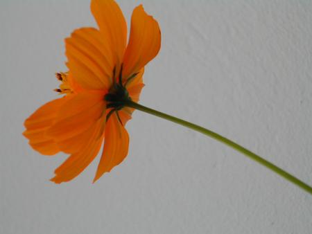 fleur-orange.jpg