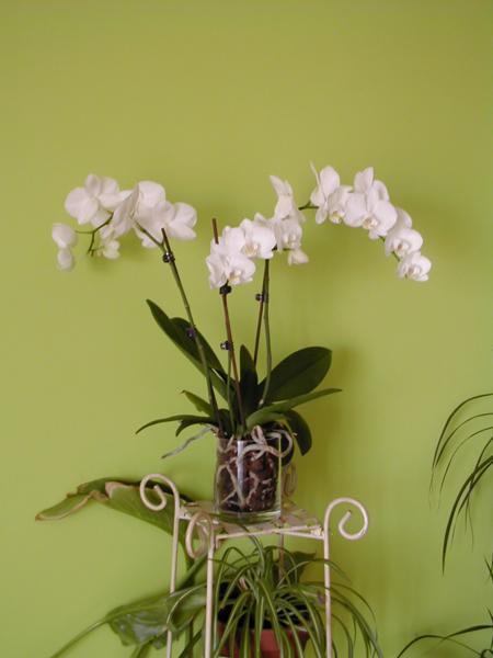 orchidees1.jpg