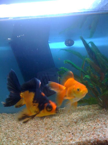 poissons-juin-09.jpg