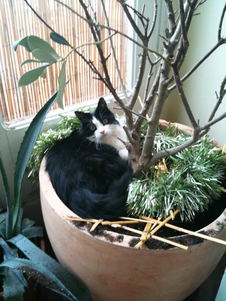 Elianthe dans l'olivier!
